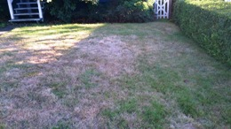 Chafer Dead grass patches (2)